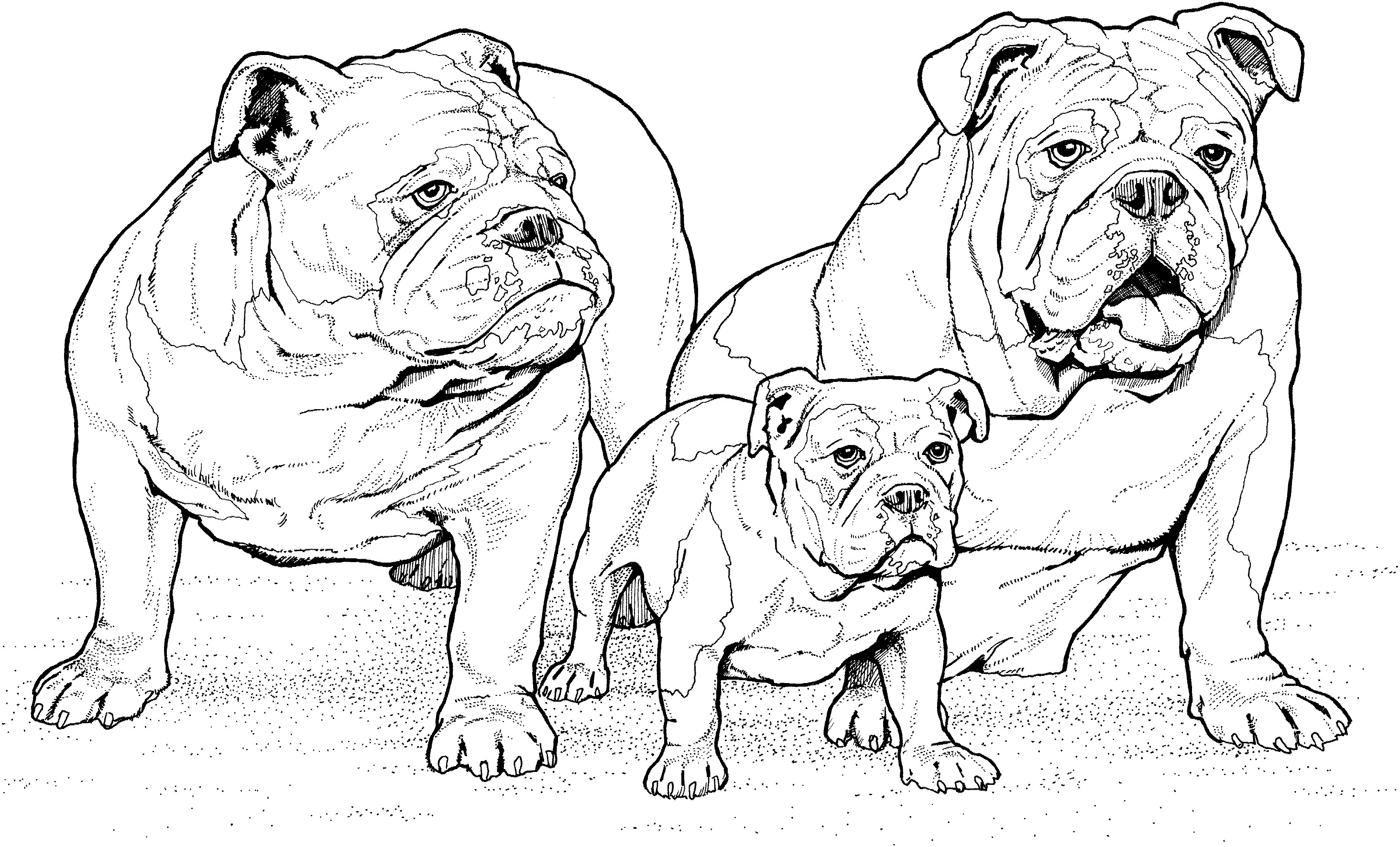 realistic puppy coloring pages realistic dog coloring pages puppy coloring pages cute pages puppy coloring realistic