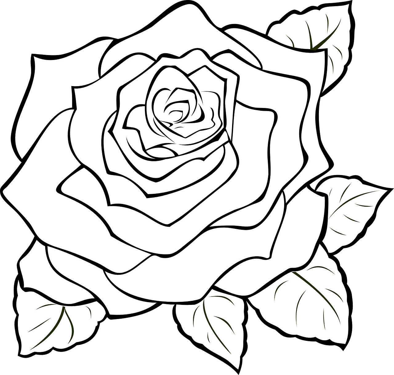 realistic rose flower coloring pages how to make drawing of rose 14 free printable rose flower pages rose coloring realistic
