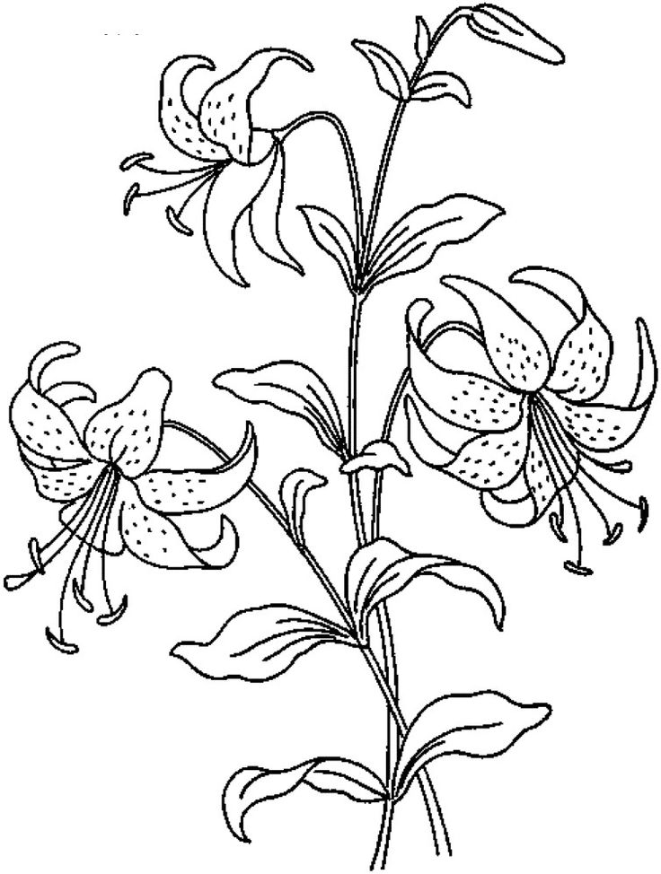 realistic rose flower coloring pages learn to draw a realistic rose flower coloring pages realistic pages flower rose coloring
