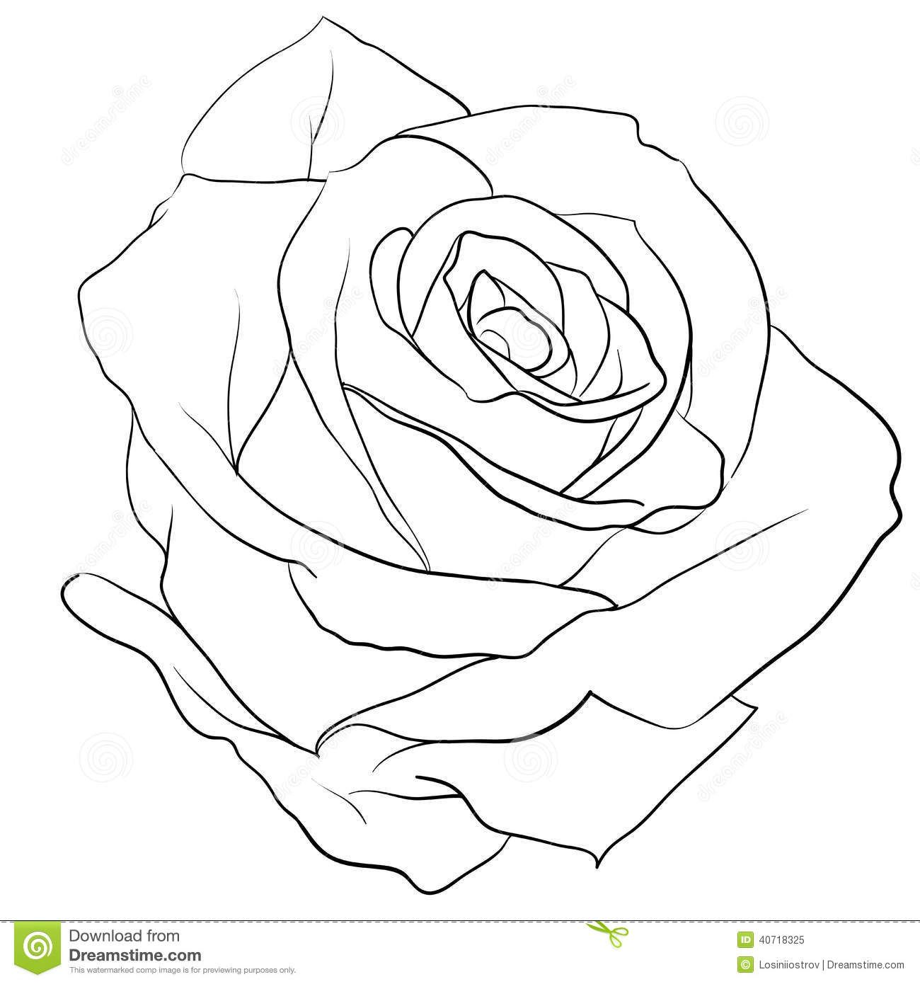realistic rose flower coloring pages pinterest rose colouring page for adults google search flower realistic coloring rose pages