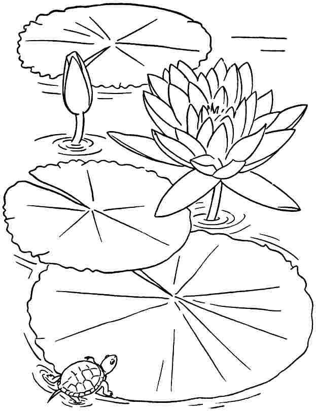 realistic rose flower coloring pages realistic flowers drawing at getdrawings free download pages coloring flower realistic rose