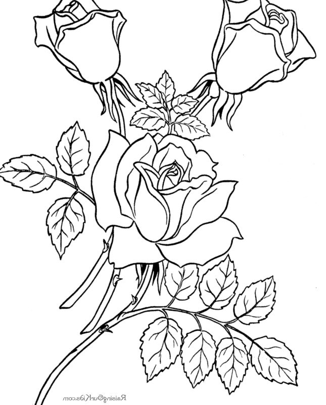 realistic rose flower coloring pages realistic rose coloring pages at getcoloringscom free coloring pages rose realistic flower