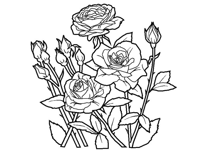 realistic rose flower coloring pages realistic rose coloring pages at getcoloringscom free flower pages realistic coloring rose