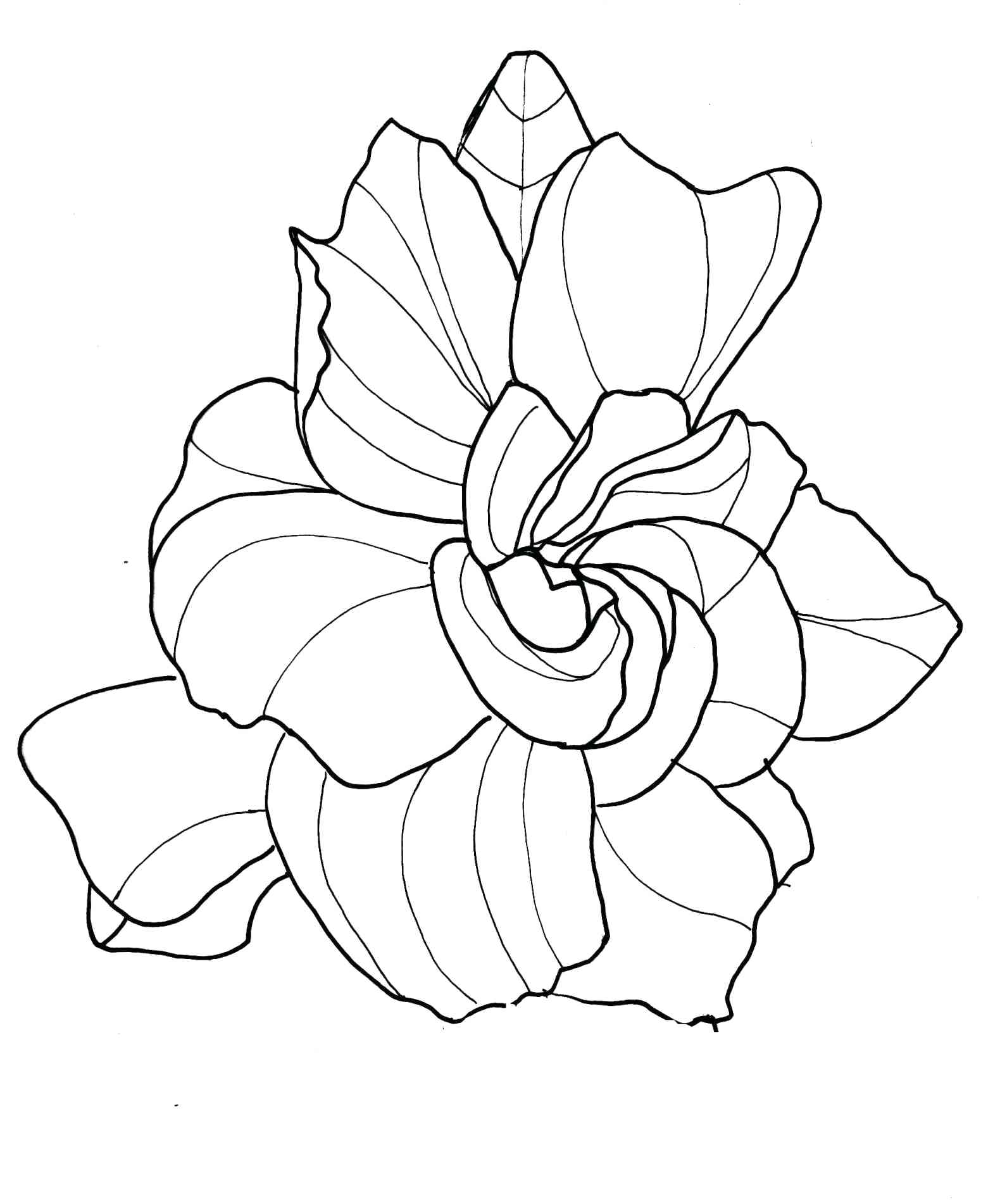 realistic rose flower coloring pages realistic rose drawing at getdrawings free download flower coloring pages realistic rose