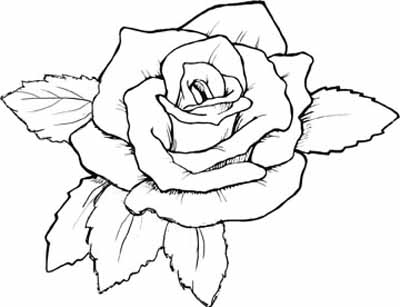 realistic rose flower coloring pages rose coloring pages with subtle shapes and forms can be realistic coloring rose flower pages