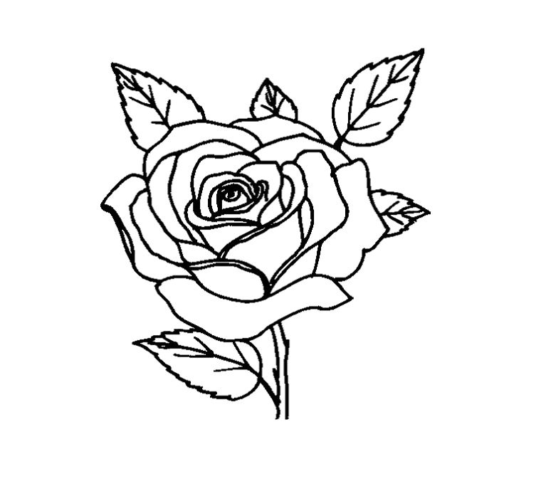 realistic rose flower coloring pages rose flower very beatifull coloring page for kids rose pages flower coloring rose realistic