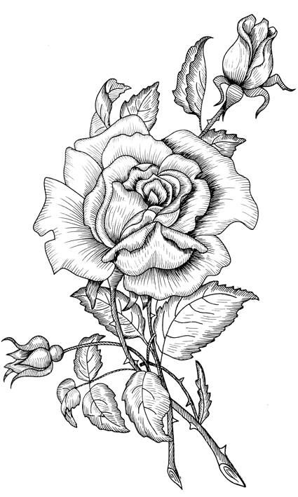 realistic rose flower coloring pages rose flowers real coloring pages printable flower rose coloring pages realistic