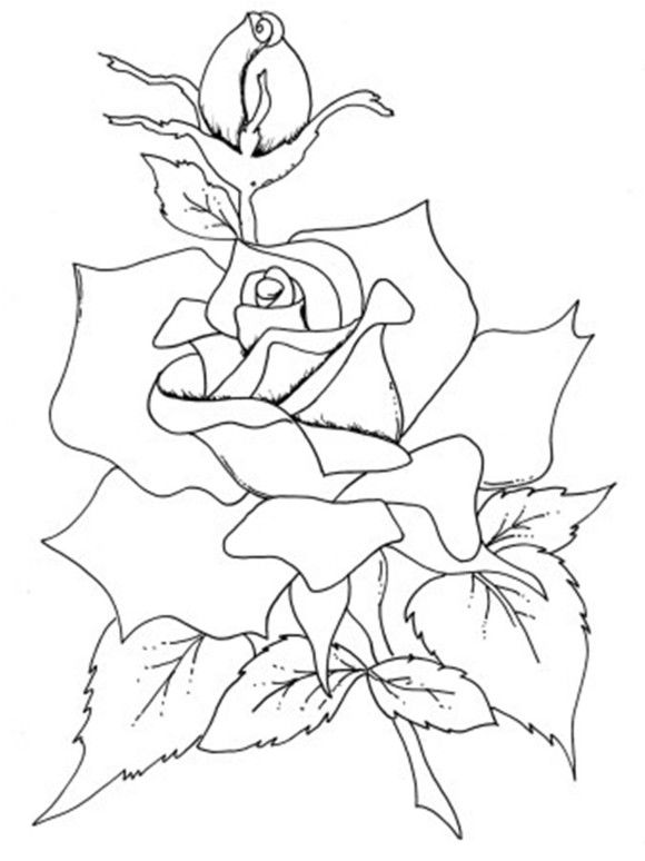realistic rose flower coloring pages roses flowers coloring pages rose coloring pages flower flower realistic coloring pages rose