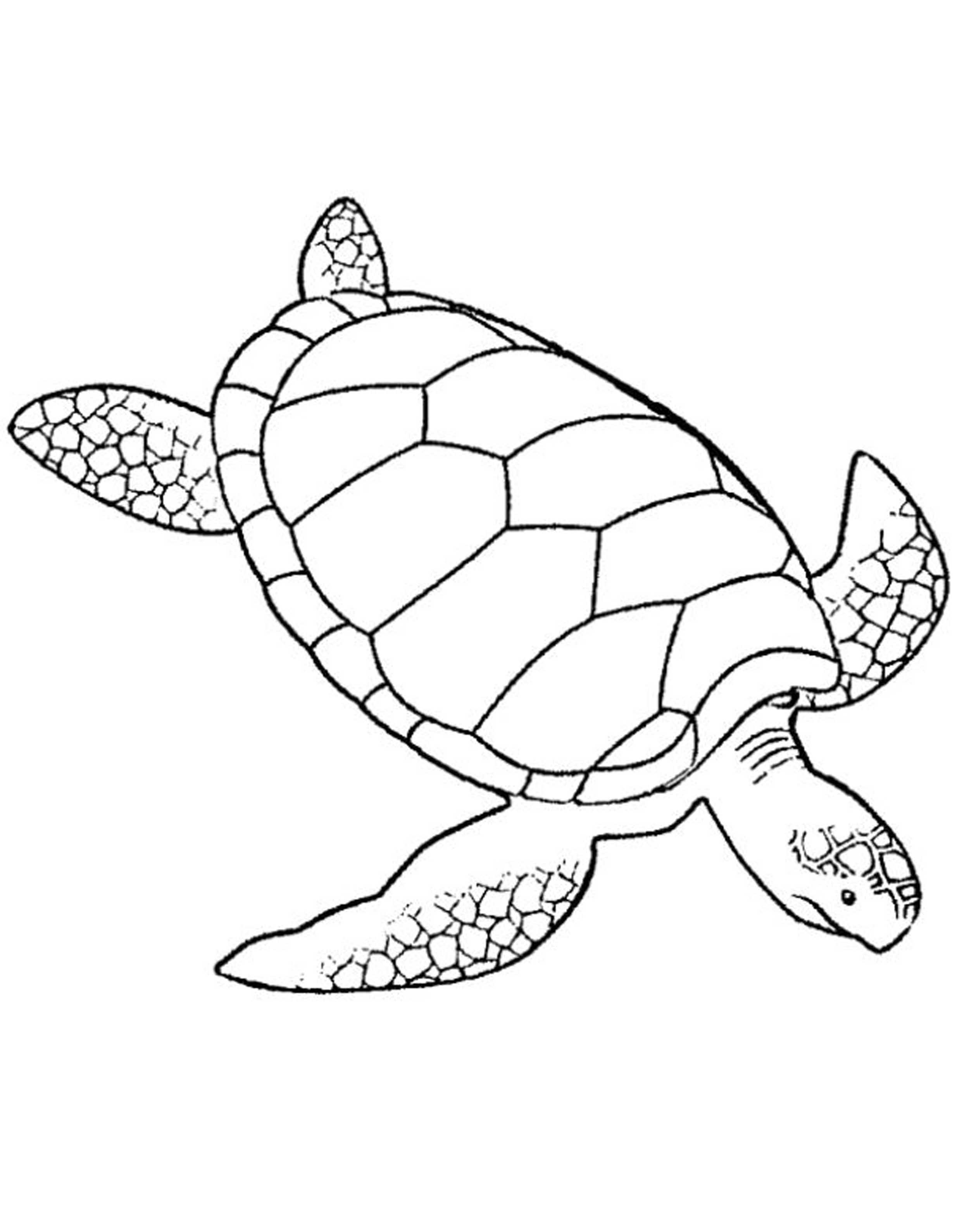 realistic turtle coloring pages alligator snapping turtle drawing at getdrawings free pages coloring turtle realistic