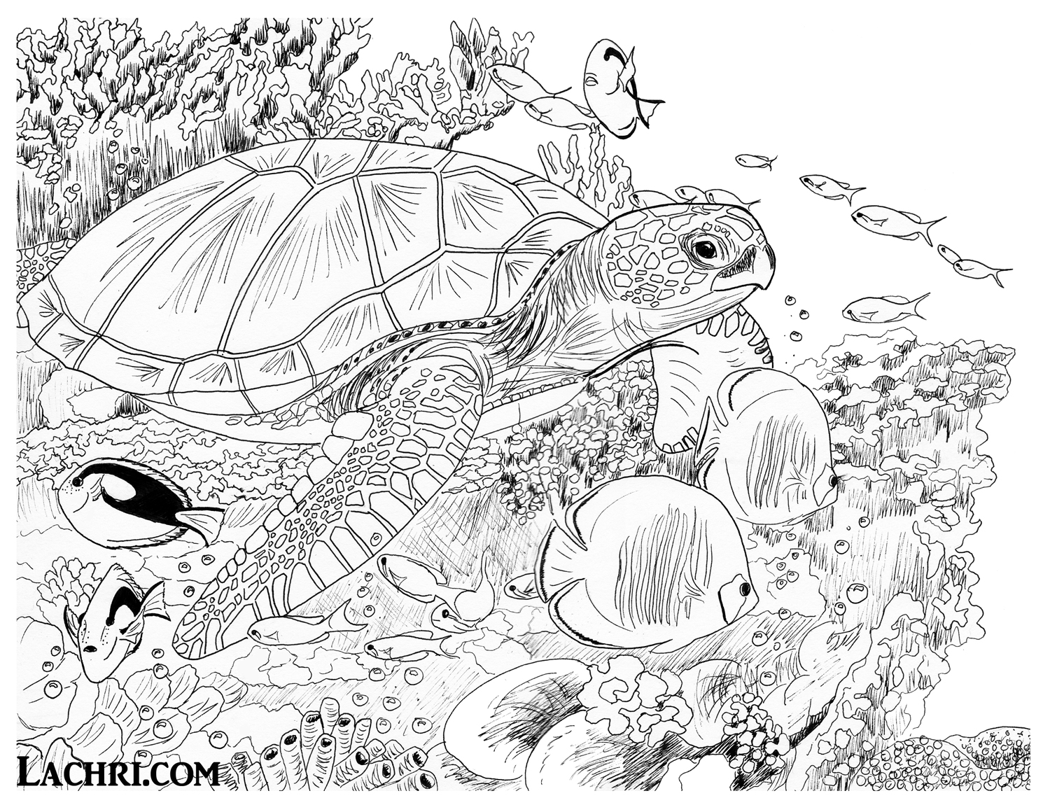 realistic turtle coloring pages baby sea turtle drawing at getdrawings free download pages realistic coloring turtle