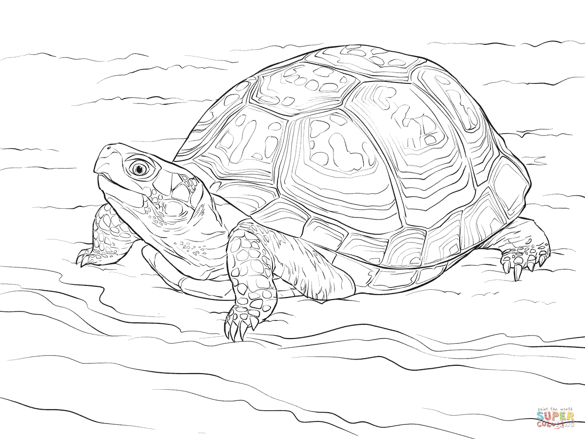 realistic turtle coloring pages cute eastern box turtle coloring page free printable coloring turtle pages realistic