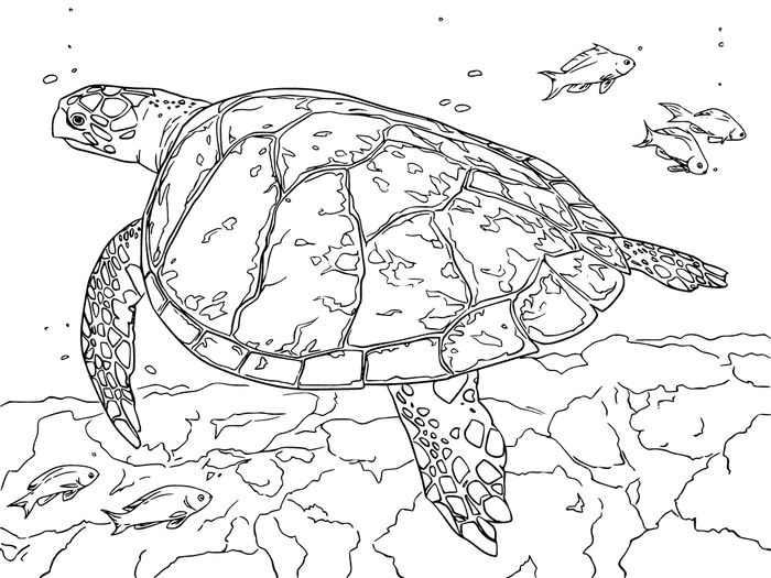 realistic turtle coloring pages fantastic sea turtle coloring pages printable coloring pages turtle realistic