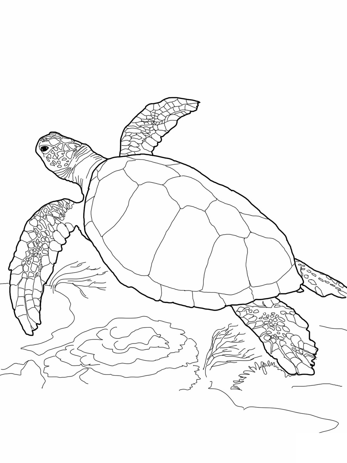 realistic turtle coloring pages free printable turtle coloring pages for kids coloring pages turtle realistic
