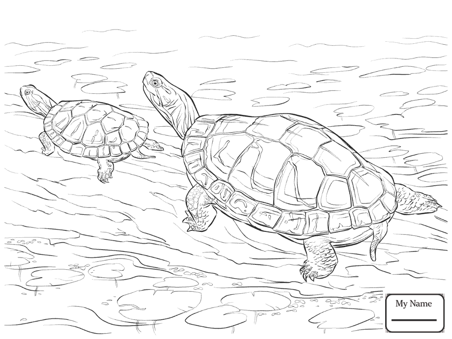 realistic turtle coloring pages print download turtle coloring pages as the realistic turtle coloring pages