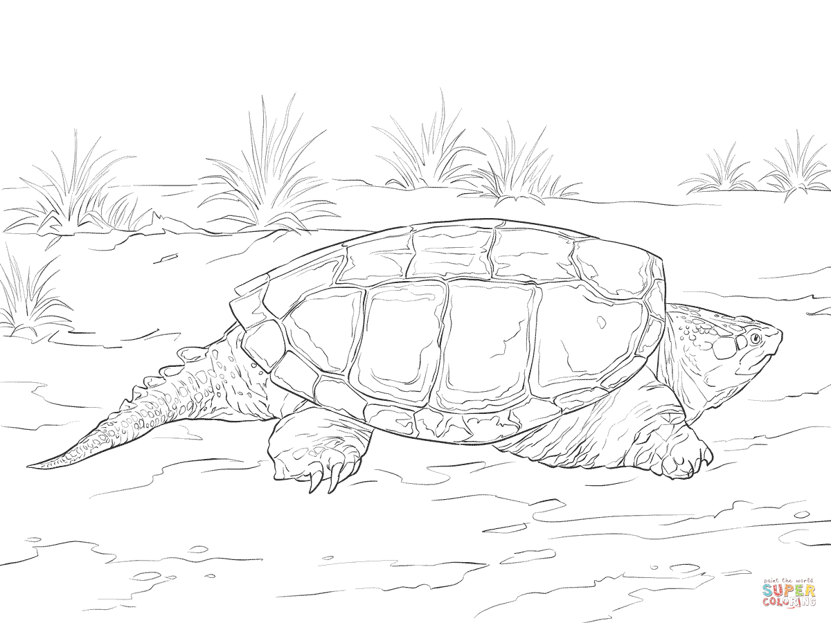 realistic turtle coloring pages realistic common snapping turtle coloring page free pages turtle realistic coloring