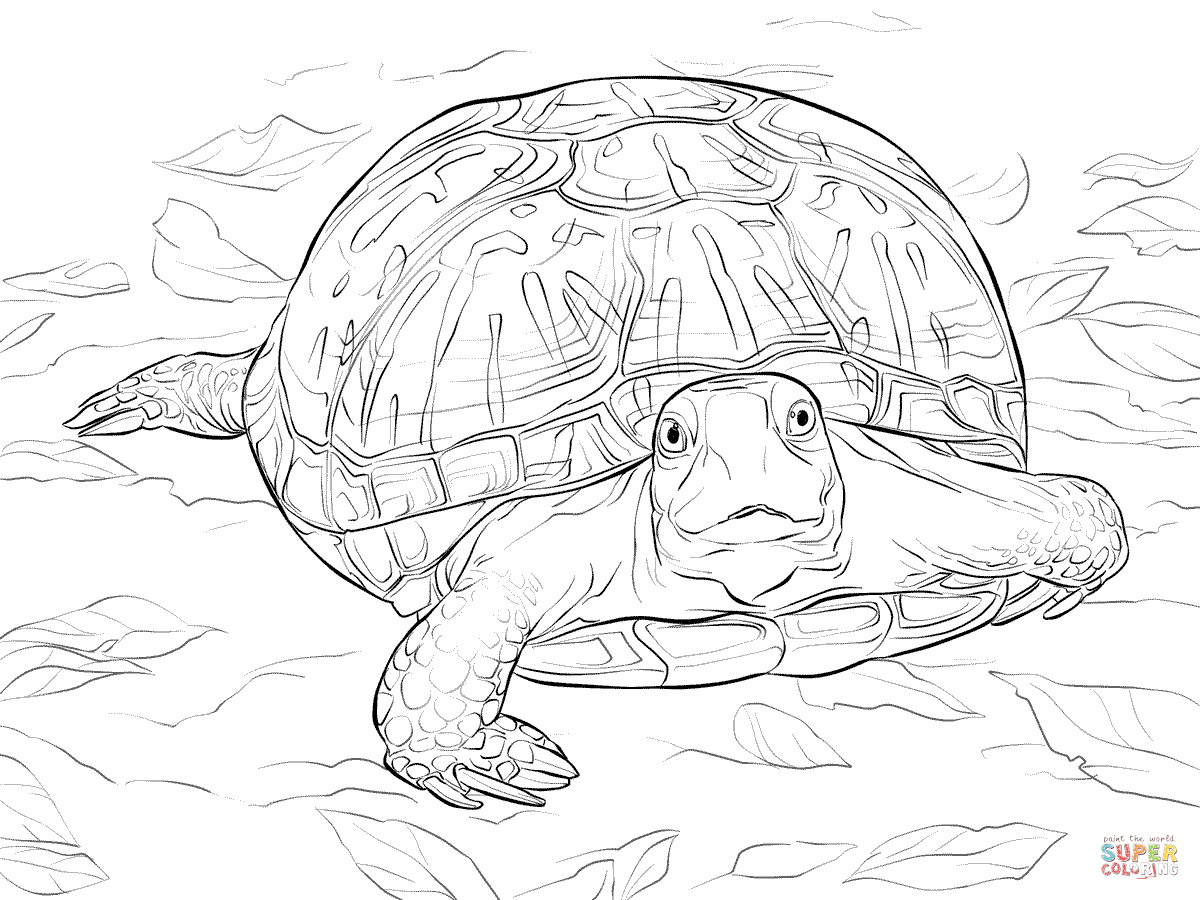 realistic turtle coloring pages realistic gopher tortoise coloring page free printable pages turtle coloring realistic