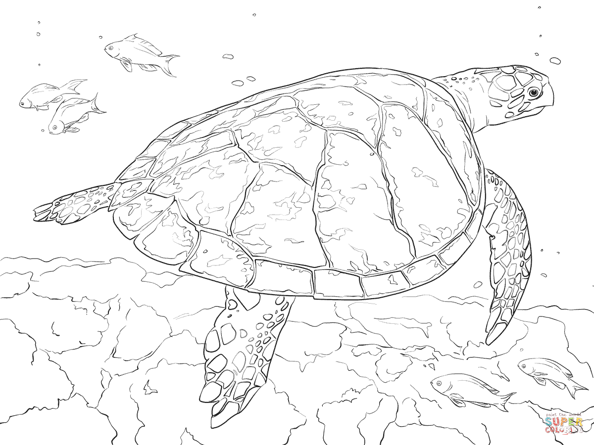realistic turtle coloring pages realistic hawksbill sea turtle coloring page free turtle pages realistic coloring