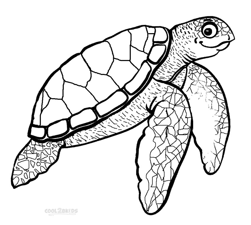 realistic turtle coloring pages realistic sea turtle drawing at getdrawings free download realistic coloring turtle pages