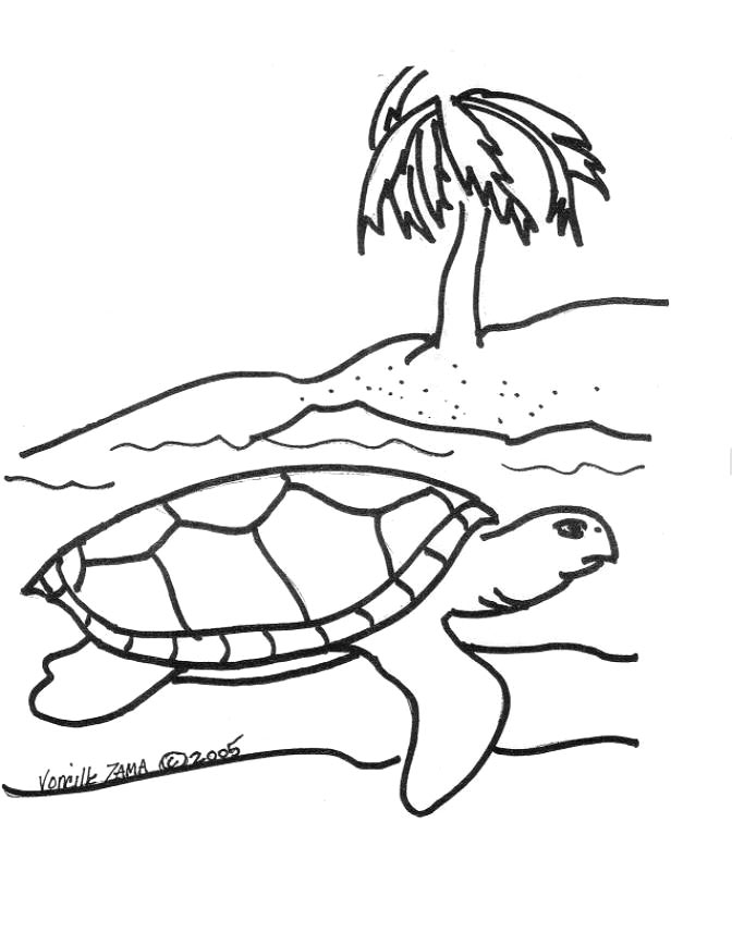 realistic turtle coloring pages realistic sea turtle drawing at getdrawings free download turtle pages coloring realistic
