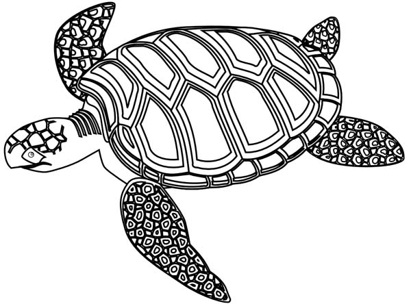 realistic turtle coloring pages realistic sea turtle drawing at getdrawings free download turtle pages realistic coloring