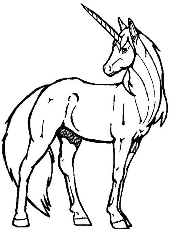 realistic unicorn coloring pages coloring pages realistic unicorn winged 2020 pages unicorn realistic coloring