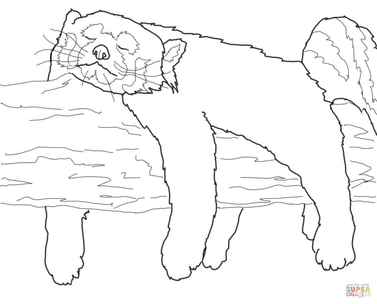 red panda coloring pages litte red panda coloring pages black and white free panda coloring red pages