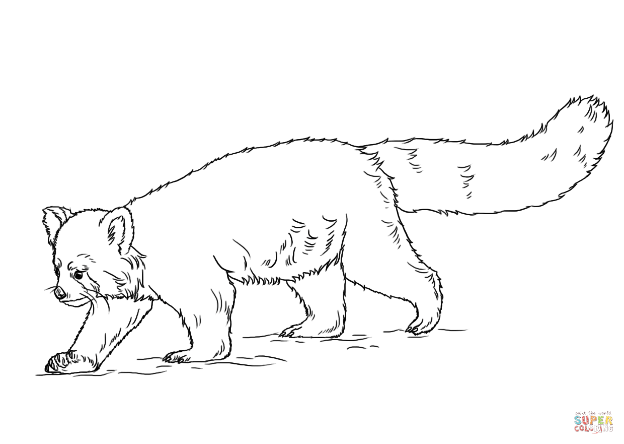 red panda coloring pages red panda coloring pages two red pandas clipart free coloring pages panda red