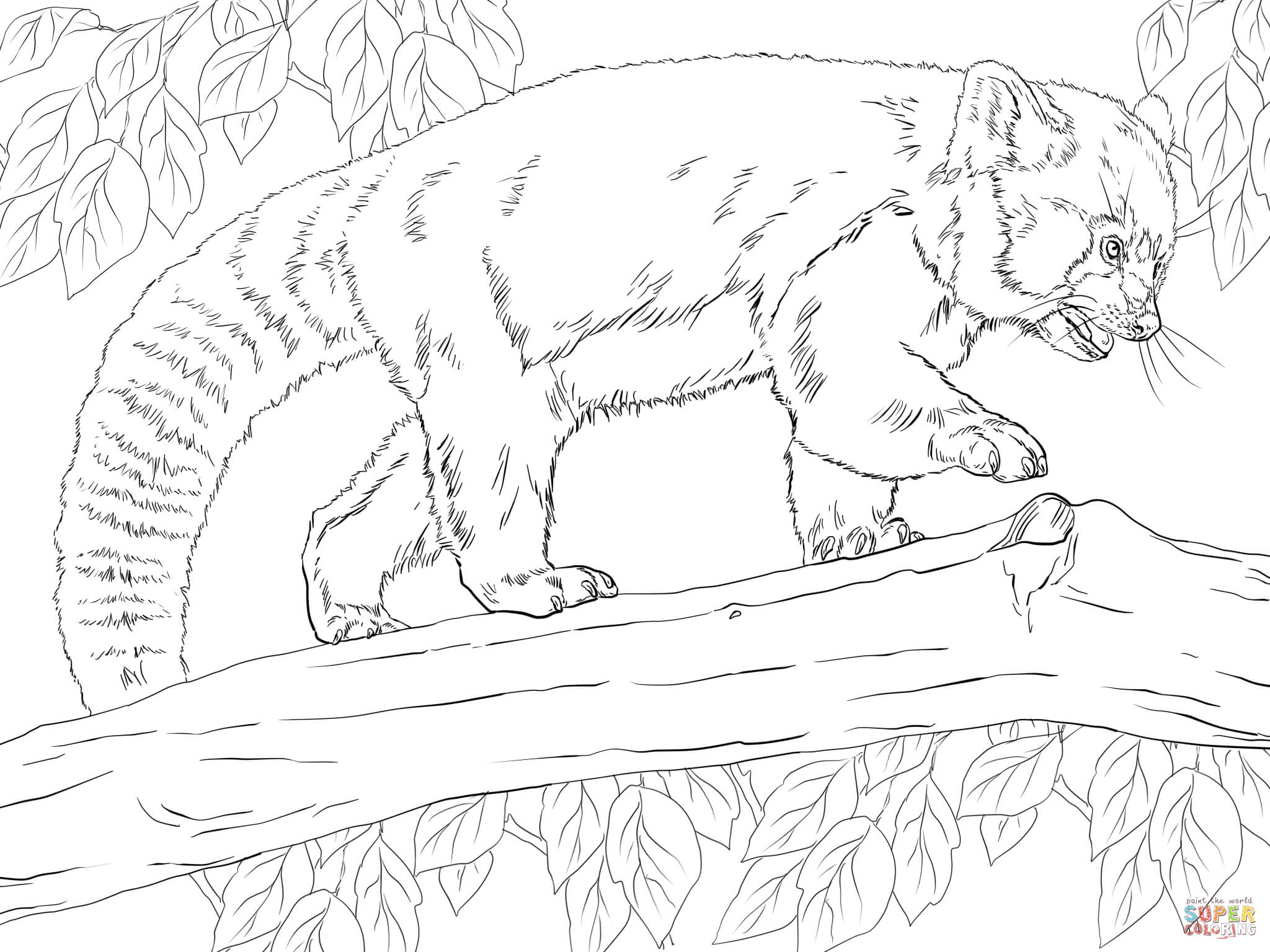 red panda coloring pages red panda illustrations royalty free vector graphics pages coloring panda red