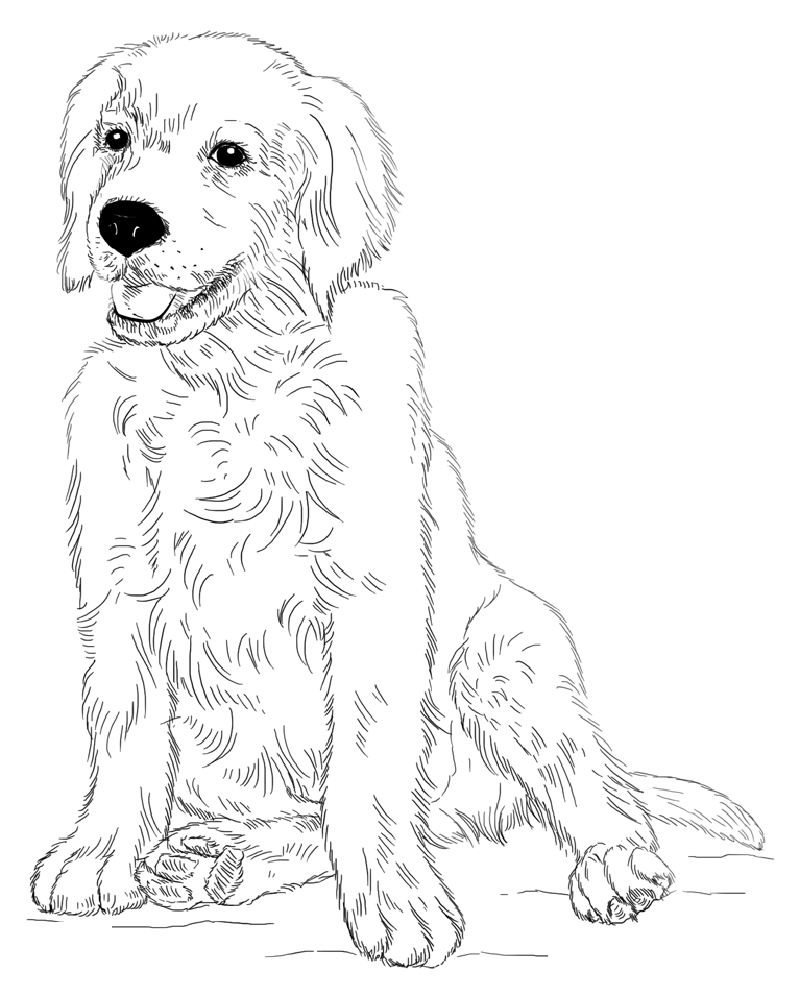 rescue dog coloring pages golden retriever coloring page for animal lovers dog pages coloring rescue