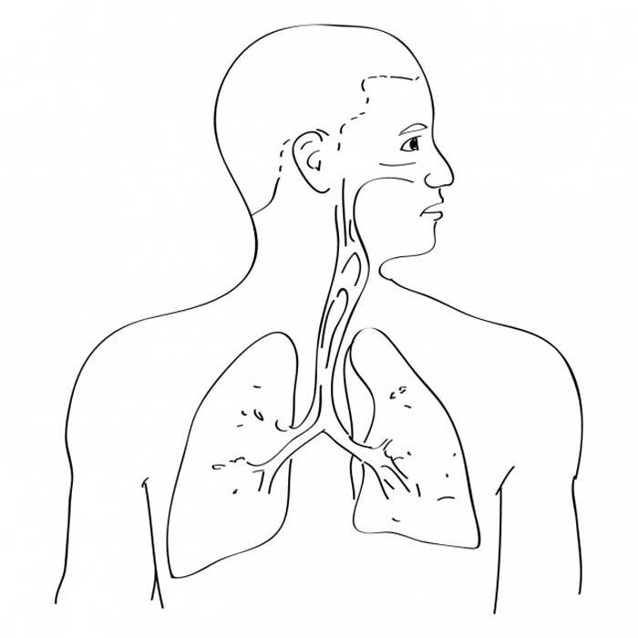 respiratory system coloring page respiratory system coloring page coloring home page respiratory coloring system 1 1