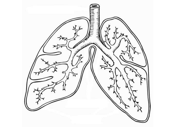 respiratory system coloring page respiratory system coloring page coloring home system coloring respiratory page