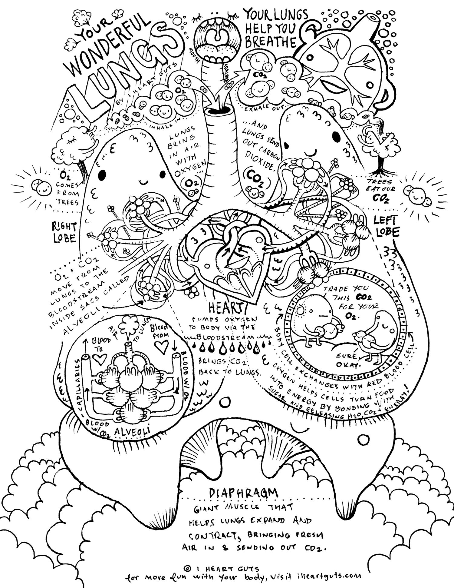 respiratory system coloring page respiratory system coloring page coloring home system page respiratory coloring