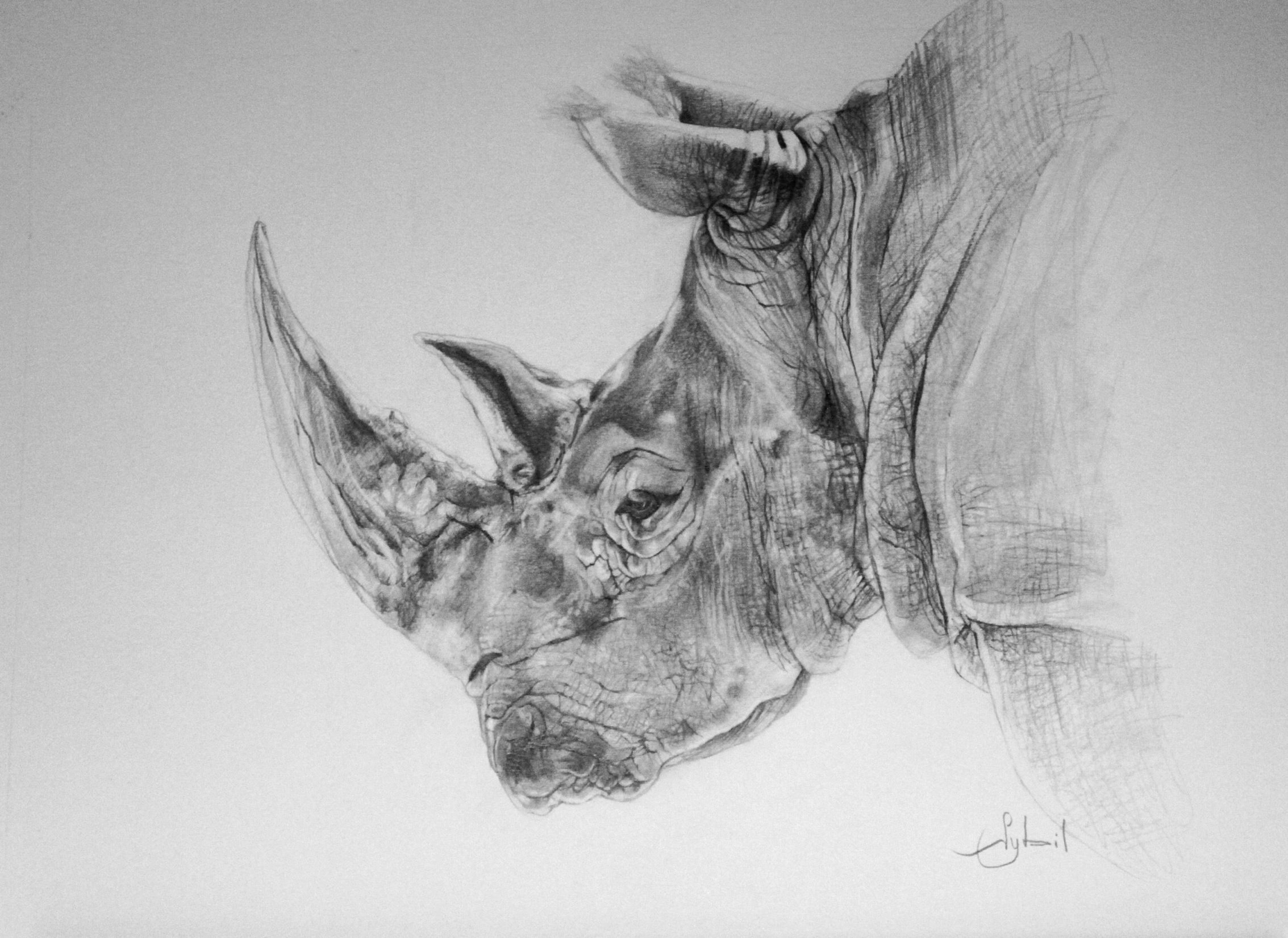 rhino drawings black rhino by lil el art on deviantart drawings rhino