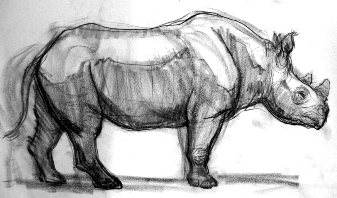 rhino drawings black rhino drawing by dave lawson rhino drawings