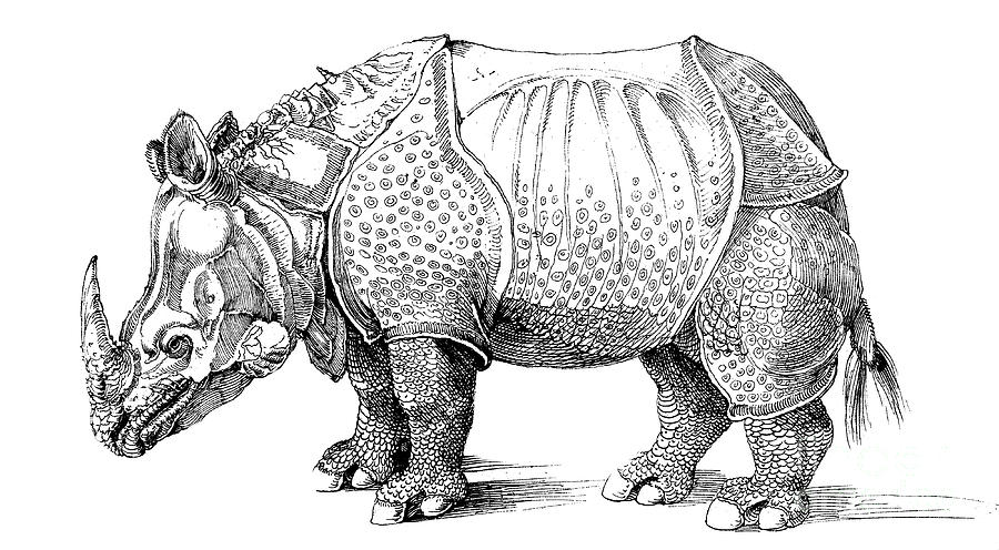 rhino drawings black rhino drawing by dave lawson rhino drawings 1 1