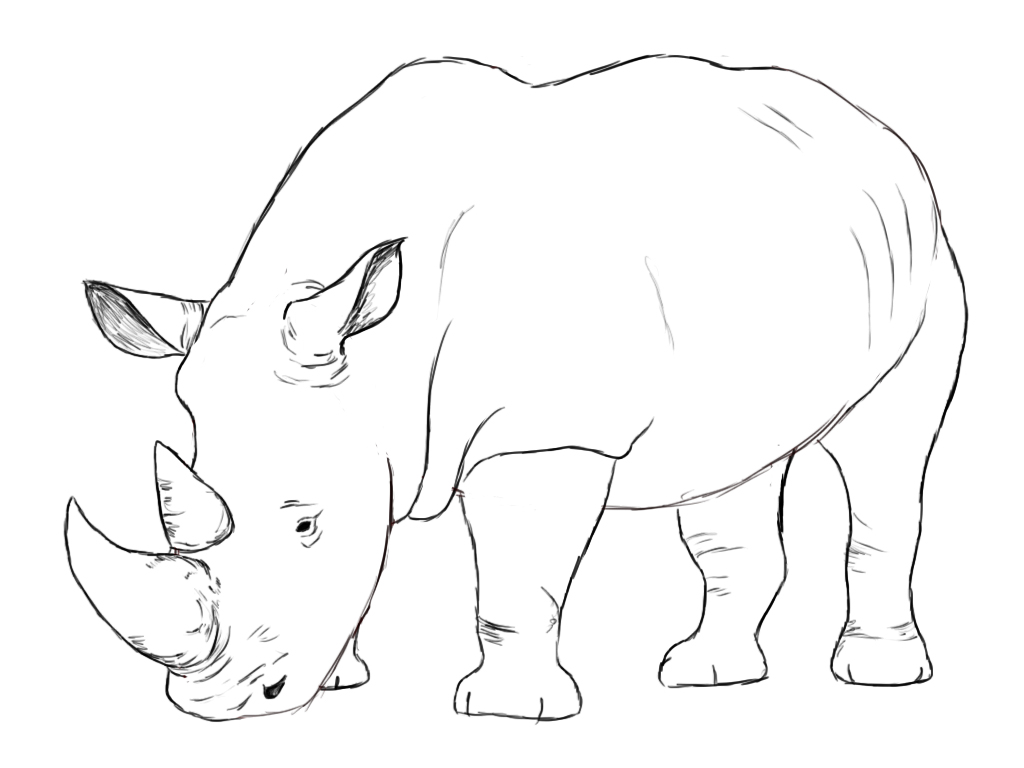 rhino drawings black rhino drawing by sharlena wood drawings rhino