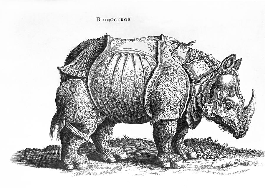 rhino drawings black rhino prints corrina thurston rhino drawings