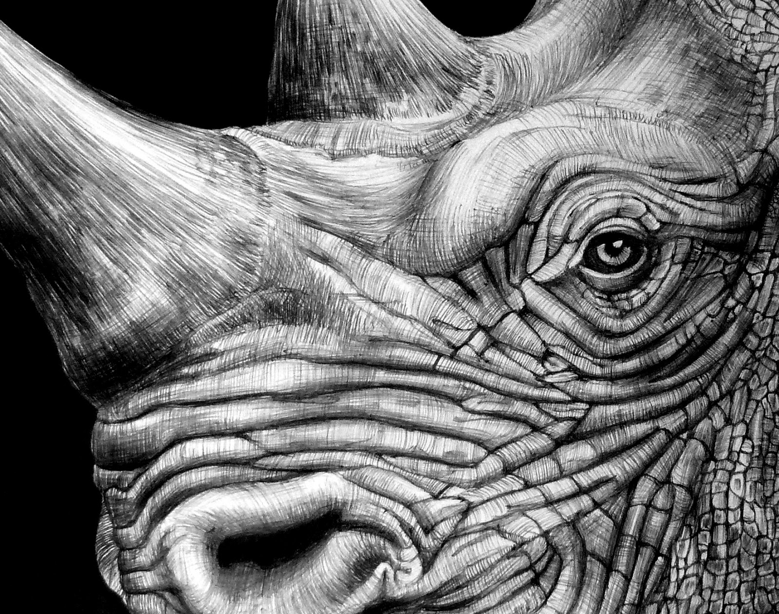 rhino drawings black rhinoceros black rhinoceros ink and pen drawing rhino drawings