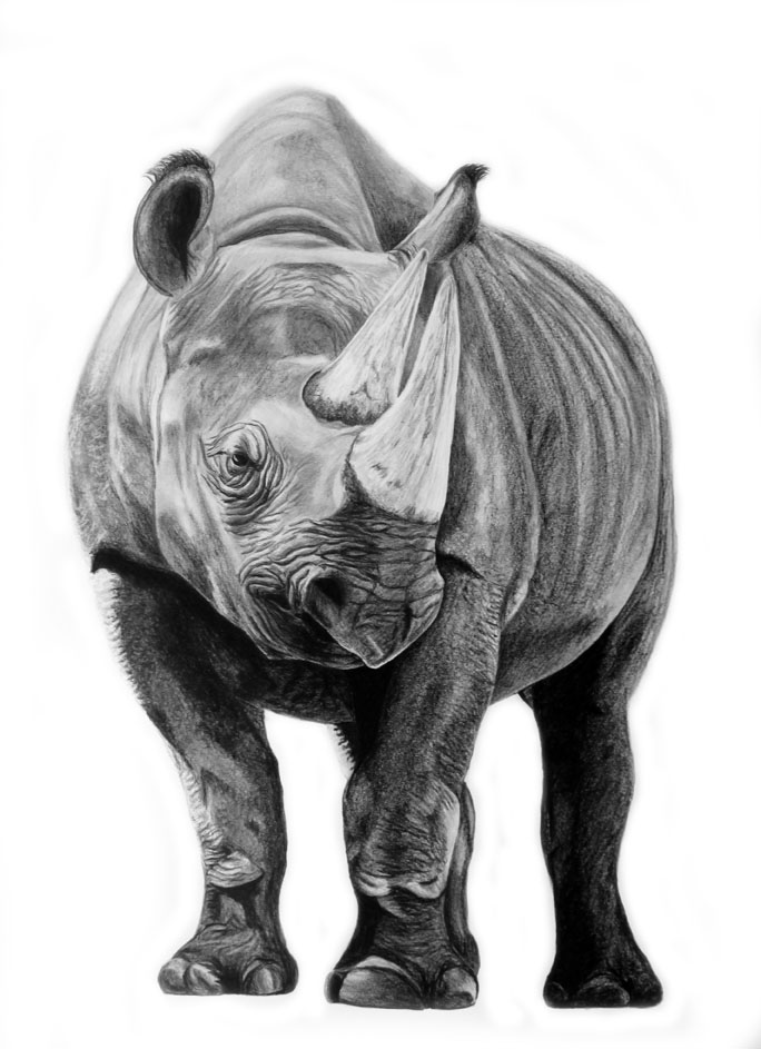 rhino drawings doodles and crap a few rhinos drawings rhino