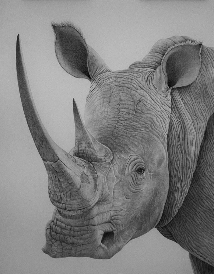 rhino drawings drawings on youtube art of wei rhino drawings