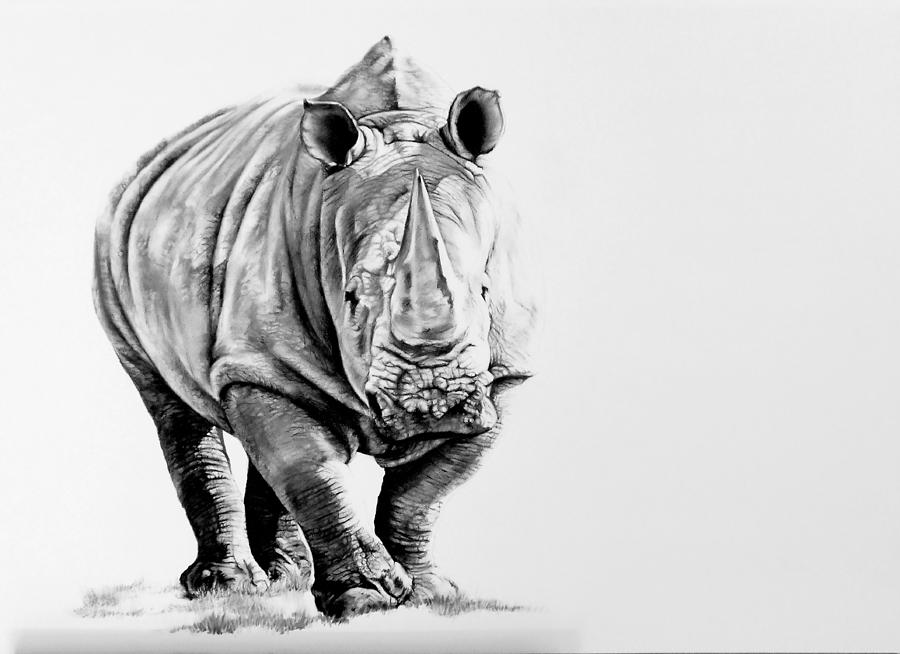 rhino drawings image result for rhino face drawing face drawing rhino drawings
