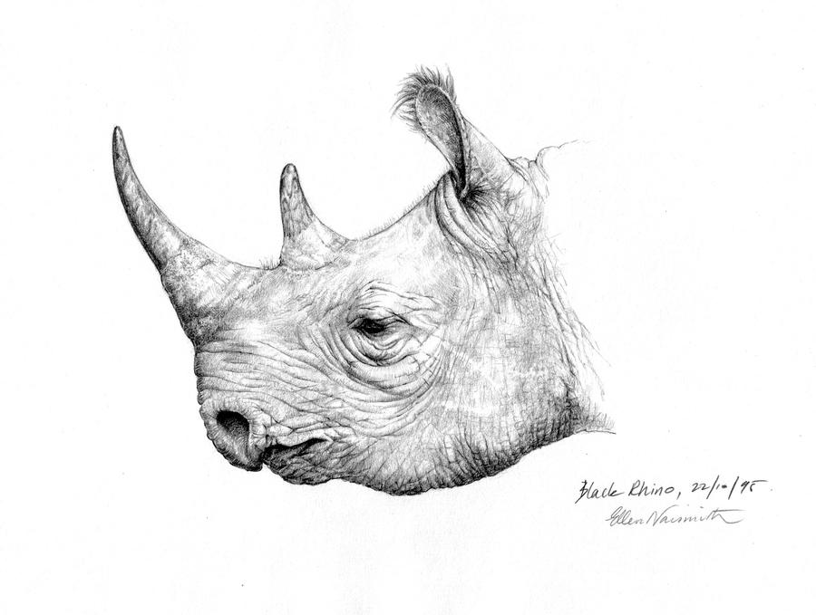 rhino drawings javan or sunda rhinoceros rhinoceros sondaicus line art rhino drawings
