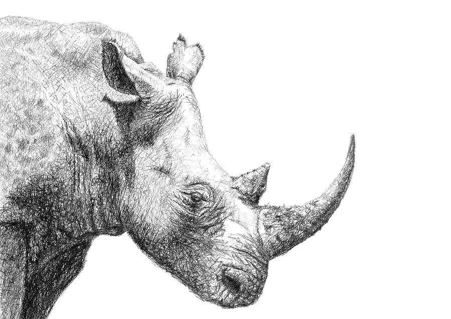 rhino drawings mzima the rhino drawing by ronny hart rhino drawings