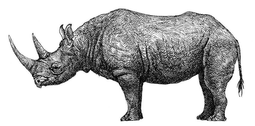 rhino drawings pencil drawing black rhino by ralph n murray iii rhino drawings