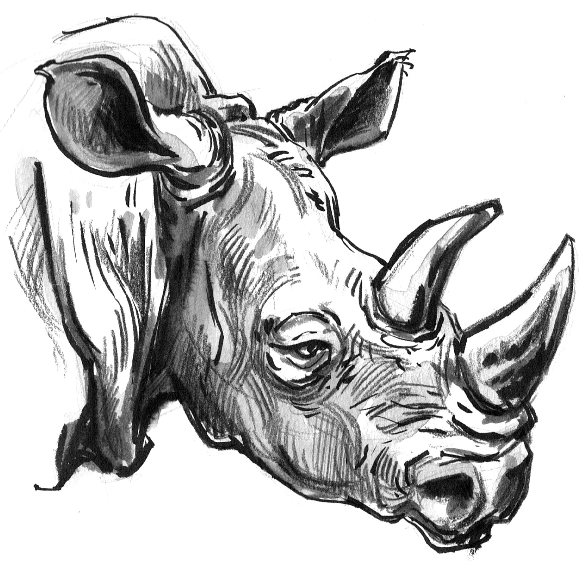 rhino drawings rhino 2 drawing by jenny mallon drawings rhino