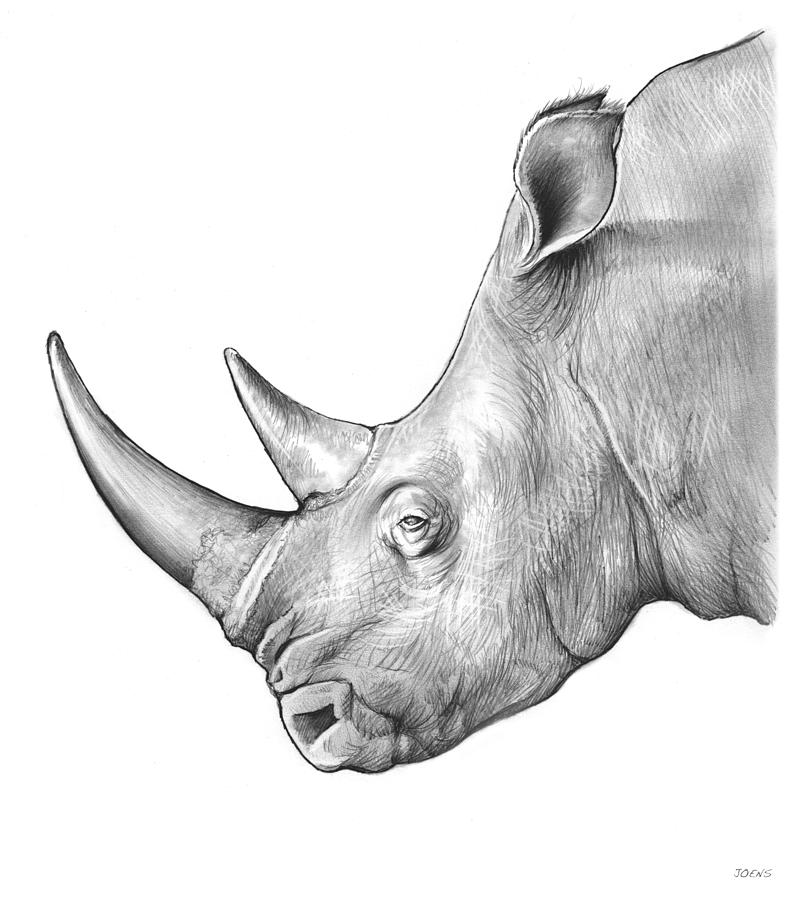 rhino drawings rhino 2019 pencil drawing by paul stowe artfinder drawings rhino