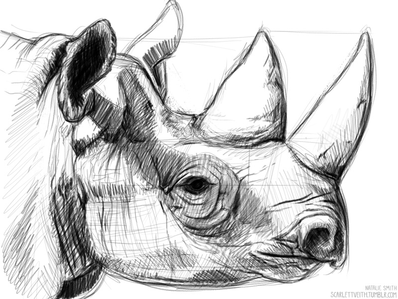 rhino drawings rhino by scott woyak rhino drawings