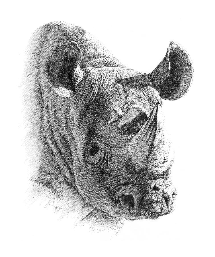 rhino drawings rhino drawing by carriephlyons on deviantart rhino drawings