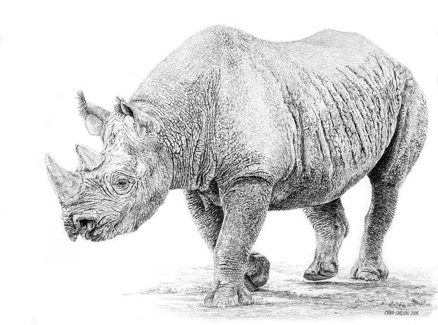 rhino drawings rhino drawing by greg joens rhino drawings