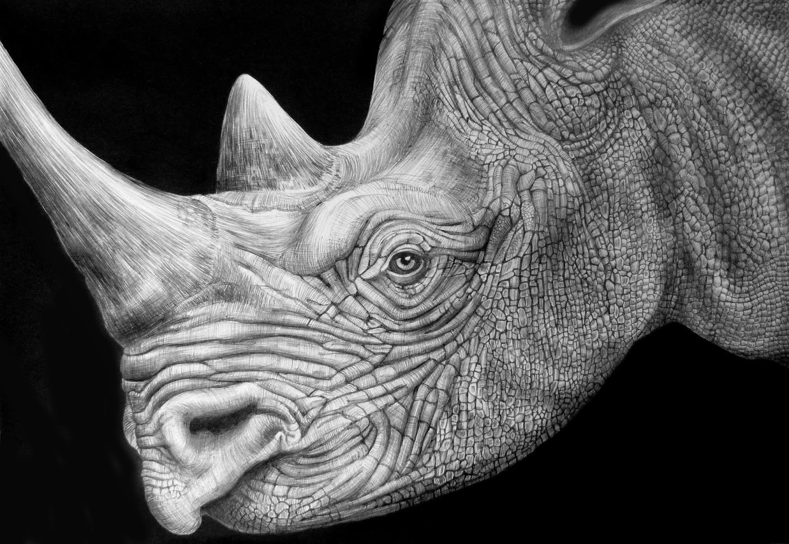 rhino drawings rhino drawing by lorrisa dussault drawings rhino